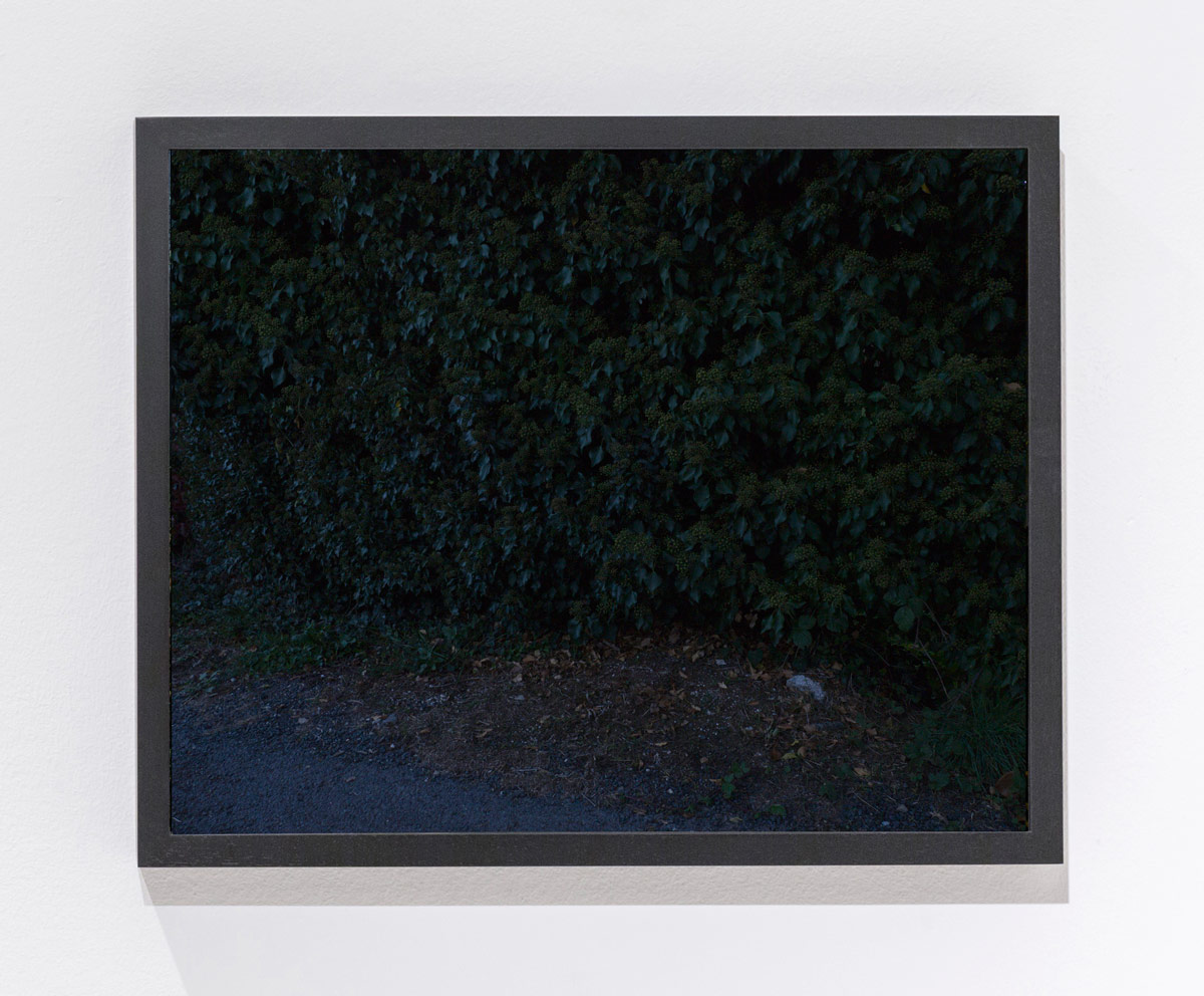 N.Lichtig(macrostickert)framed